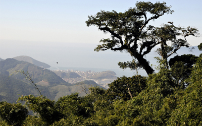 Pedra Branca forest to the north of São Paolo
