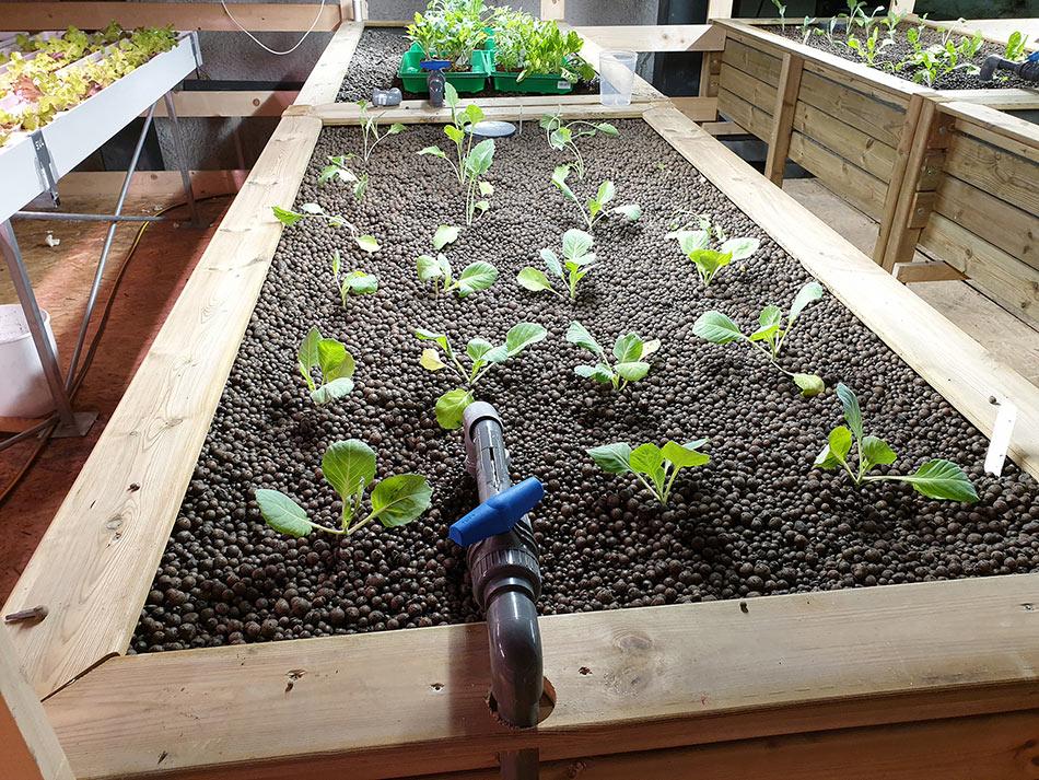 Underground green farming concept